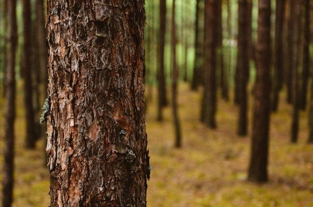 trees-932147_960_720